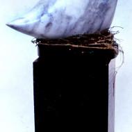 marble-bird
